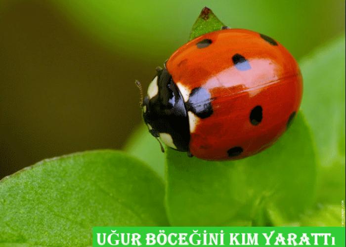 Uğur Böceğini Kim Yarattı?